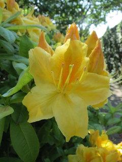 FOTKA - zlute kvety