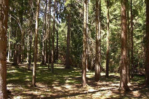 FOTKA - Mezi stromy