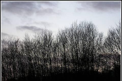 FOTKA - stromyy