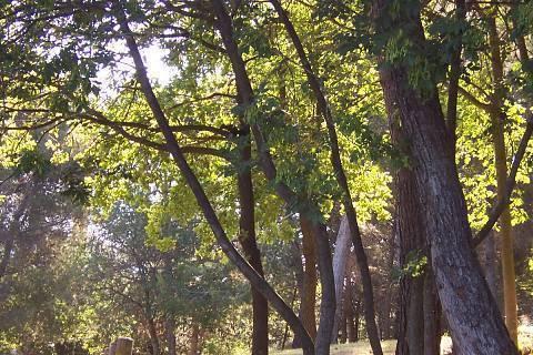 FOTKA - veverka na stromě..