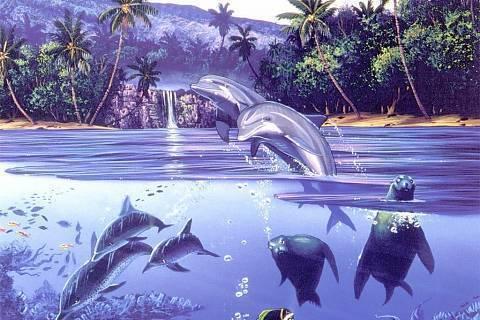 FOTKA - delfinn
