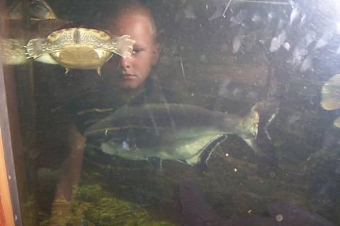 FOTKA - Hra s rybkami