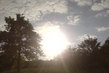 Stromy, slunce