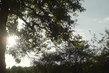 Slunce za stromem