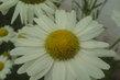 Bílé kytky