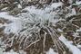 zmrzlá tráva 2