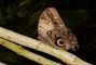trochu odrbaný motýl
