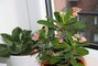 kaktusek