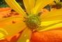 Květina makro
