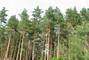 lesní krása