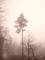 mlha havirov 10
