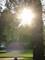 slunce ve stromě