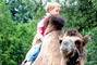 jízda na velbloudovi