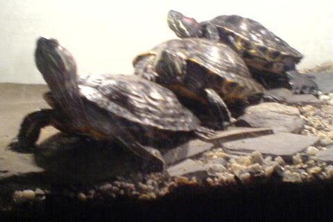 FOTKA - želvinky