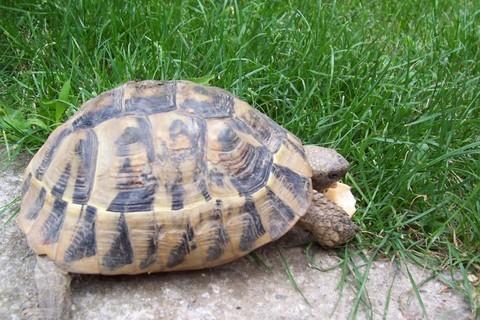 FOTKA - krmení želvy