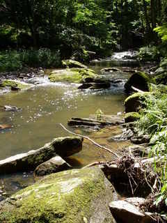 FOTKA - řeka Doubrava (4)