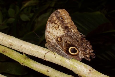 FOTKA - trochu odrbaný motýl