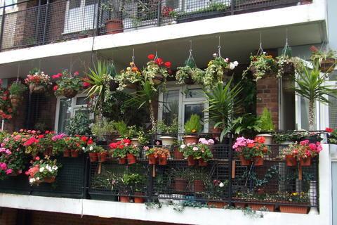 FOTKA - Balkonek plný květin kousek od Notting Hillu