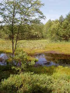 FOTKA - rašeliniště kolem Velkého Dářka