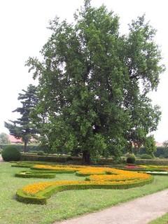 FOTKA - Května zahrada 1