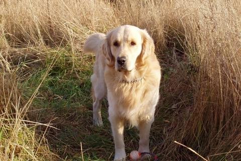 FOTKA - pes  stojící :-)