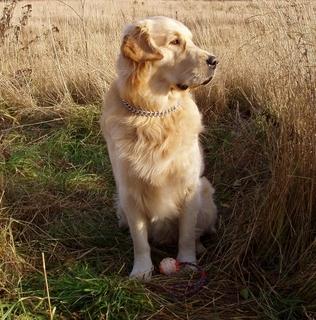 FOTKA - pes  sedící  :-)