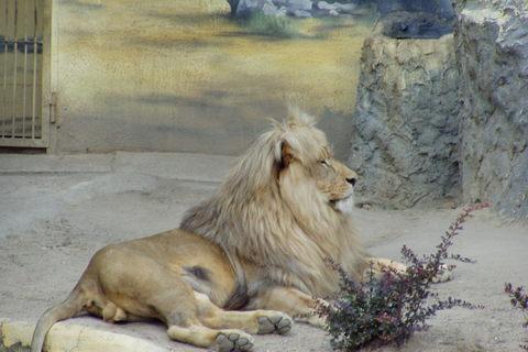 FOTKA - Lev - král zvířat
