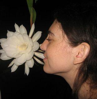 FOTKA - Sultánova květina