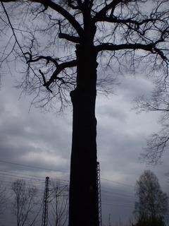 FOTKA - král dub