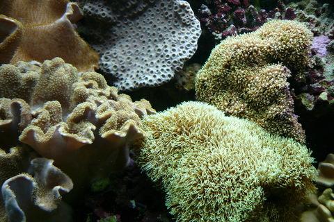 FOTKA - Mořský svět 6