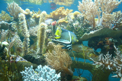 FOTKA - Mořský svět 8