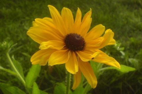 FOTKA - žlutá kytka trochu zblízka