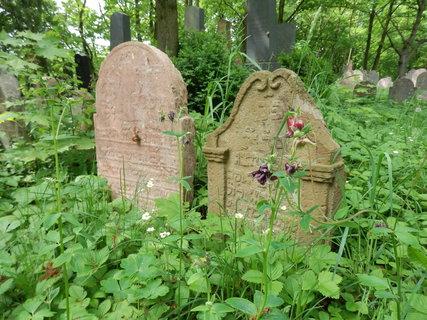 FOTKA - zarostlý židovský hřbitov v Litni, Berounsko