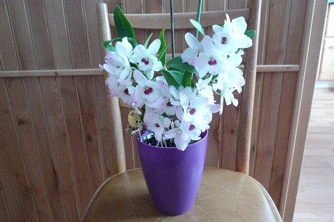 FOTKA - orchidej mi takto kvete