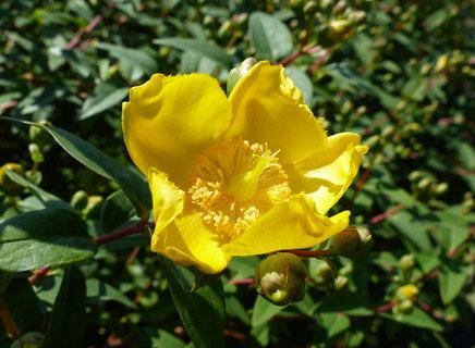 FOTKA - zluty kvet
