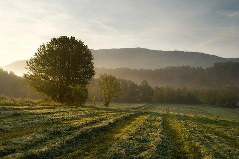 FOTKA - Ráno na lukách