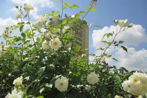 FOTKA - Bydlení -  skrytý věžák
