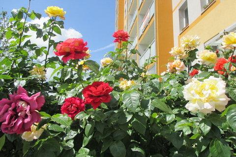 FOTKA - Bydlení -  s vůní růží