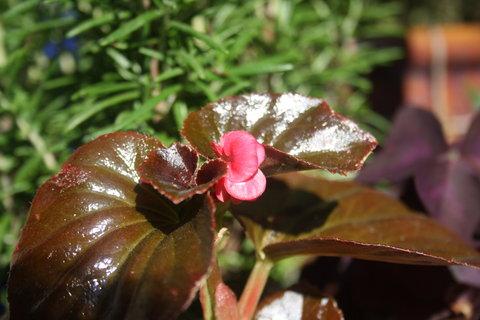 FOTKA - 1 květ