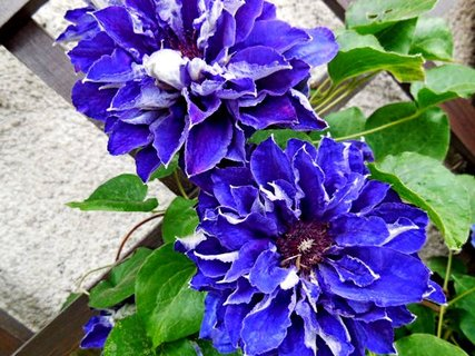FOTKA - květy..