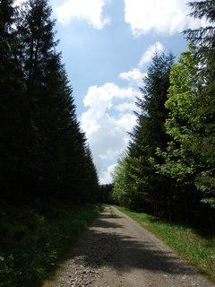 FOTKA - NS Les, Borová Lada, Šumava