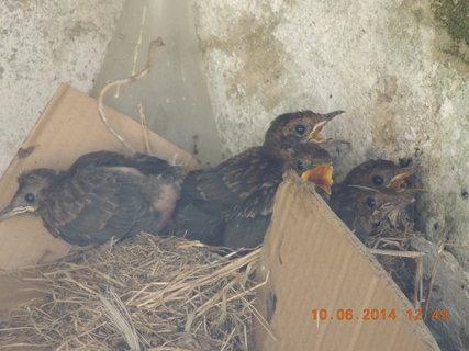 FOTKA - Hnízdo už je těsné 10.6 2014