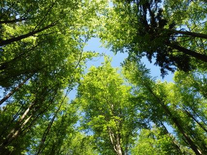 FOTKA - je tu krááásně - bukový les - Světlá hora na Šumavě