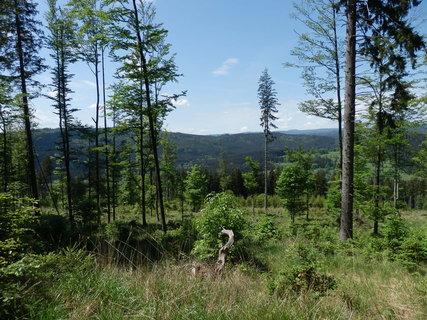 FOTKA - kam značky nevedou, šumavské toulání, na úbočí Liščí hory (1049 m)
