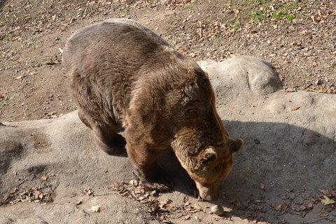 FOTKA - Medvěd v zoo