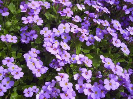 FOTKA - fialová paráda