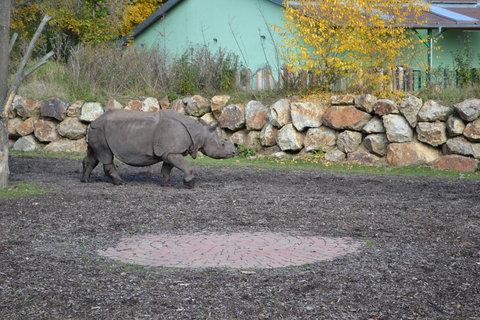 FOTKA - Nosorožec indický