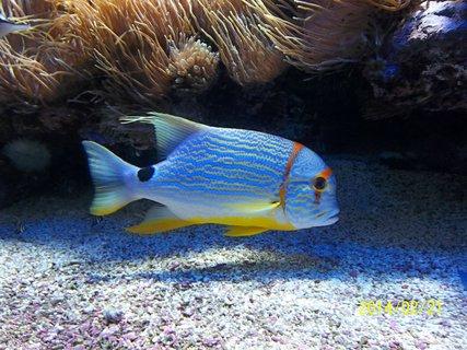 FOTKA - taky oceánografické muzeum..Monako