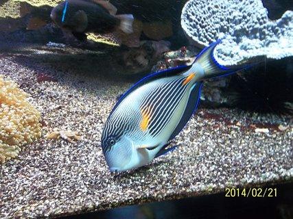 FOTKA - rybka - oceánografické muzeum..Monako