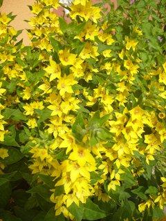 FOTKA - žlutá záře u našeho domu